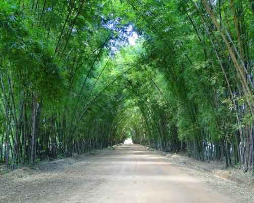 bambous_700